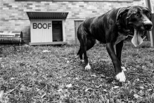 Dogs of Sydney (19 of 55)