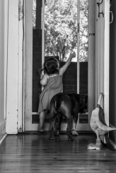 Dogs of Sydney (2 of 11)
