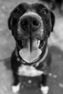 Dogs of Sydney (32 of 55)