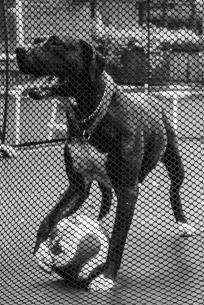 Dogs of Sydney (4 of 55)