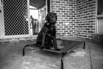 Dogs of Sydney (4 of 55)