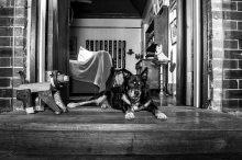 Dogs of Sydney (10 of 30)