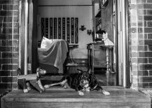 Dogs of Sydney (11 of 30)