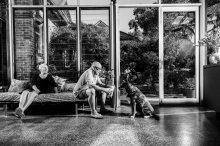 Dogs of Sydney (18 of 30)