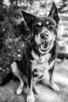 Dogs of Sydney (20 of 30)