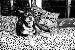 Dogs of Sydney (24 of 30)