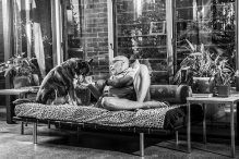 Dogs of Sydney (3 of 30)