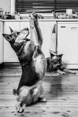 Dogs of Sydney 01 (1 of 10)