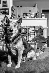 Dogs of Sydney 01 (3 of 10)