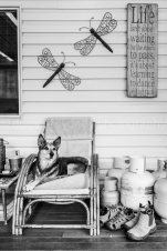 Dogs of Sydney 01 (5 of 10)