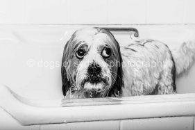 Dogs of Sydney (14 of 14)