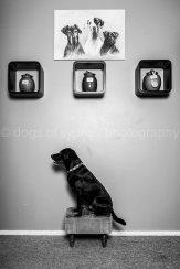Dogs of Sydney (15 of 25)