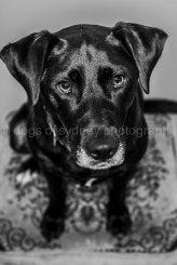 Dogs of Sydney (18 of 25)