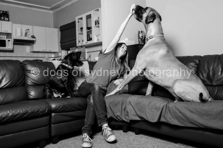 Dogs of Sydney (5 of 7)