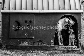 DogsofSydney (11 of 47)