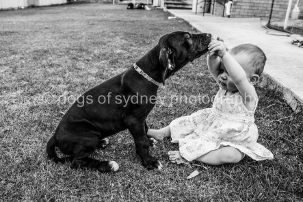 DogsofSydney (25 of 47)