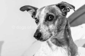 Hugo (5 of 12)