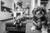 Gizmo and Albion (2 of 38)
