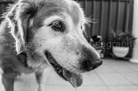 Bailey-Blog (13 of 17)
