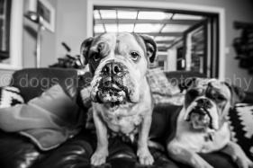 Daisy-Freddie (10 of 35)